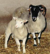 Dolly og mor